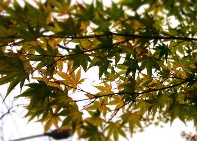 b-japan-hakone_8