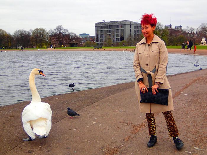 a-london-swan