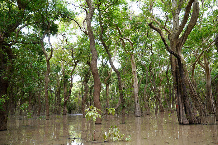 d-siem-reap-1-flooded-forest-22