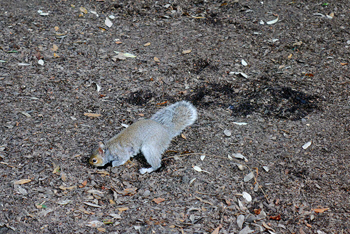 aa-london-yishyene-12-squirrel-hyde-park