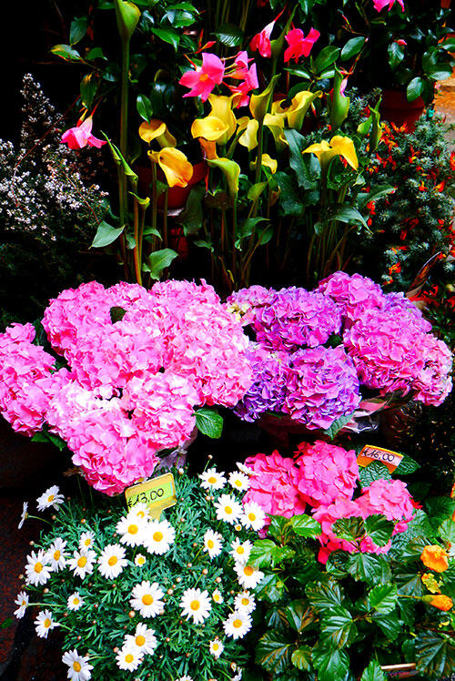 bologna-italy-38-flowers