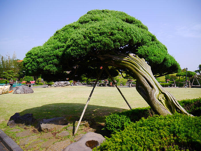 jeju-korea-13-spirited-garden