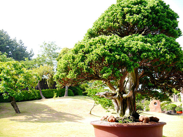 jeju-korea-14-spirited-garden