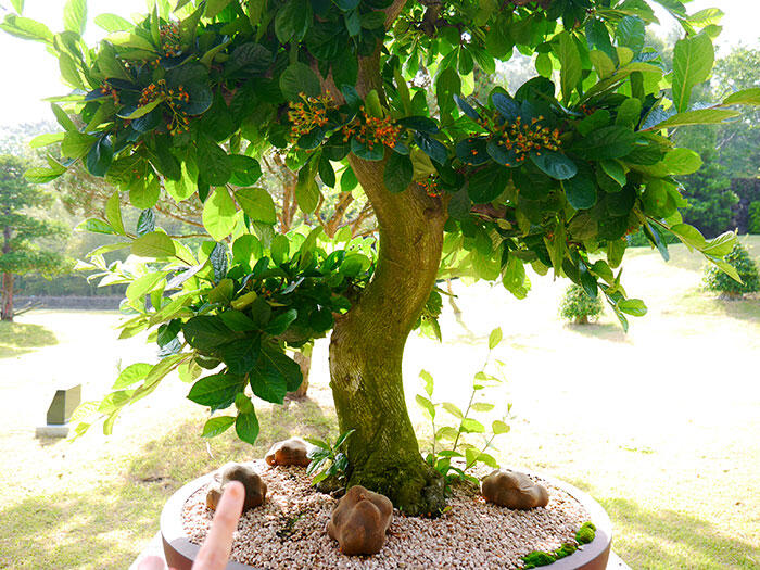 jeju-korea-15-spirited-garden