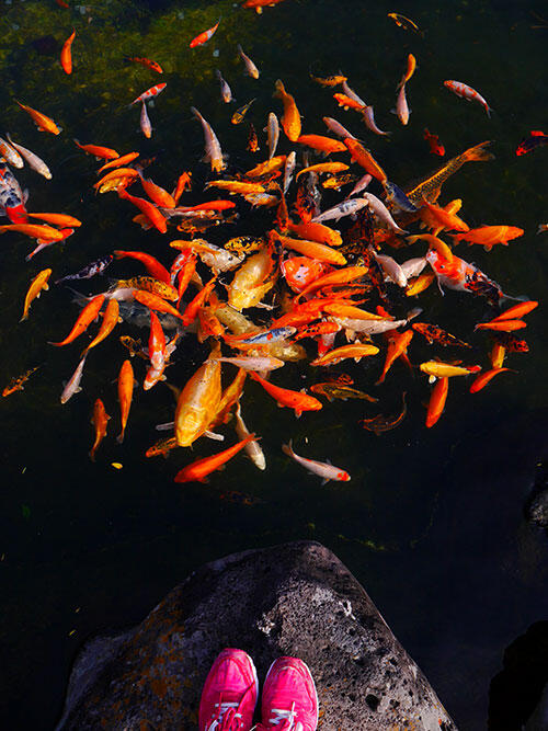 jeju-korea-22-spirited-garden-koi-pond
