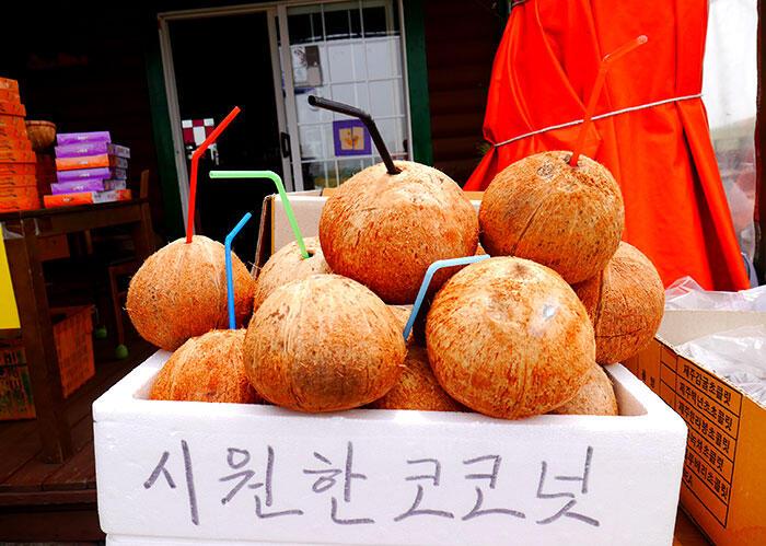 jeju-korea-15-coconuts-mount-sanbang
