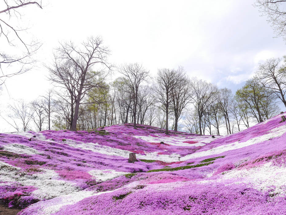 Spring in Hokkaido Media Trip with Parlo Tours & Air Asia X-165