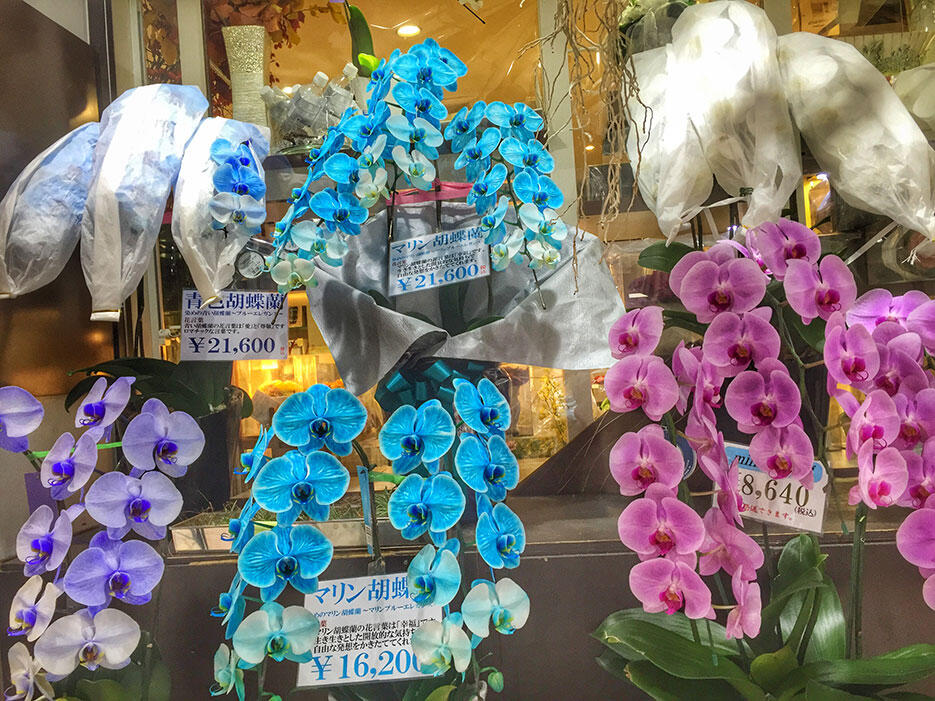 japan-4-tokyo-ginza-blue-purple-orchids