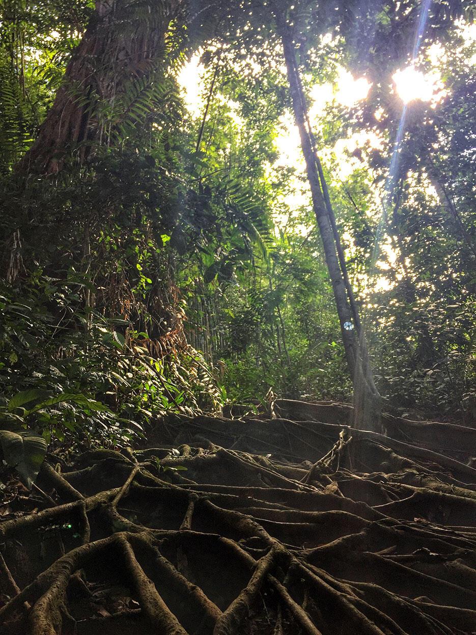 bukit-kutu-kuala-kubu-bharu-hiking-malaysia-3