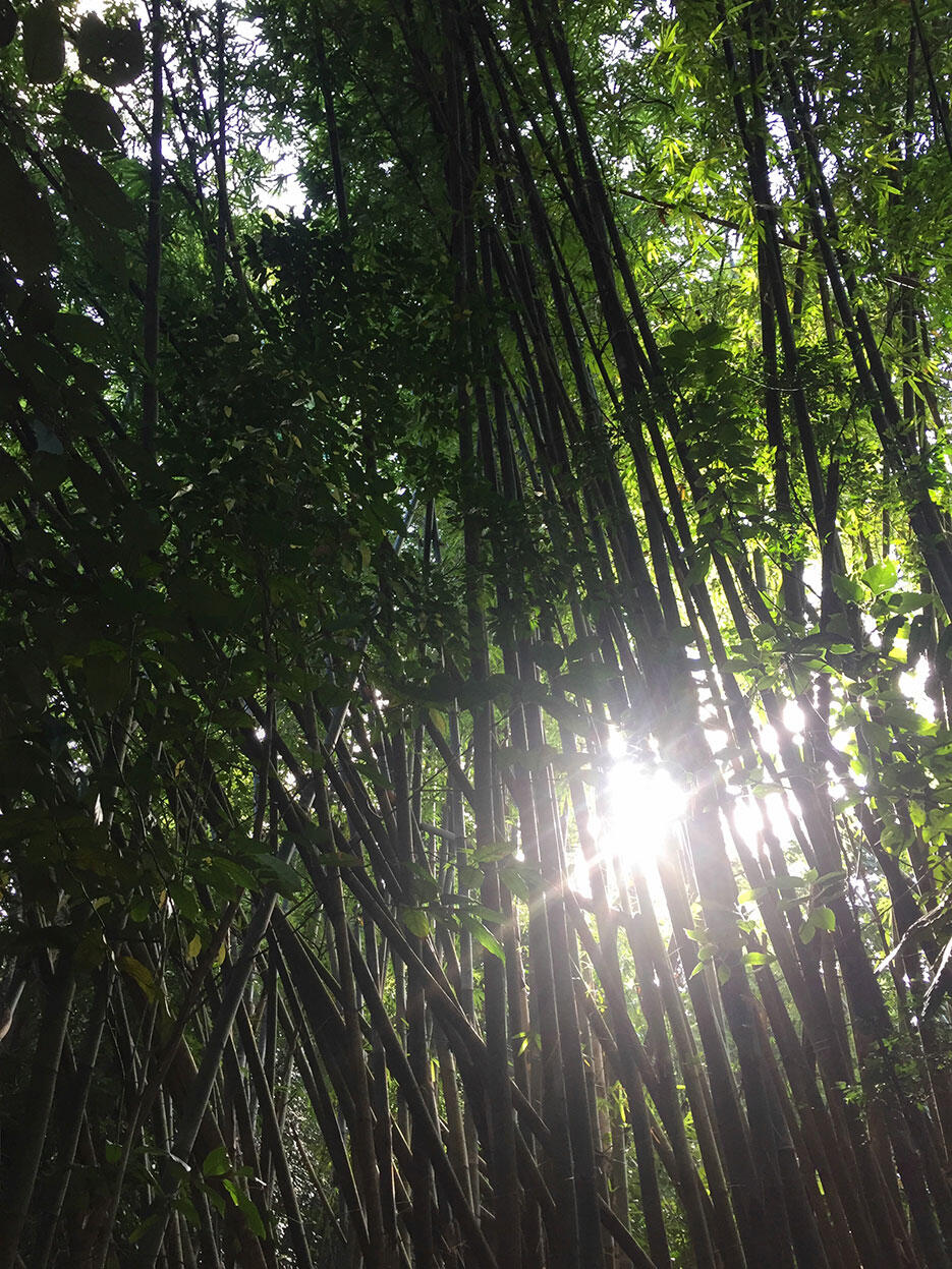 bukit-kutu-kuala-kubu-bharu-hiking-malaysia-7