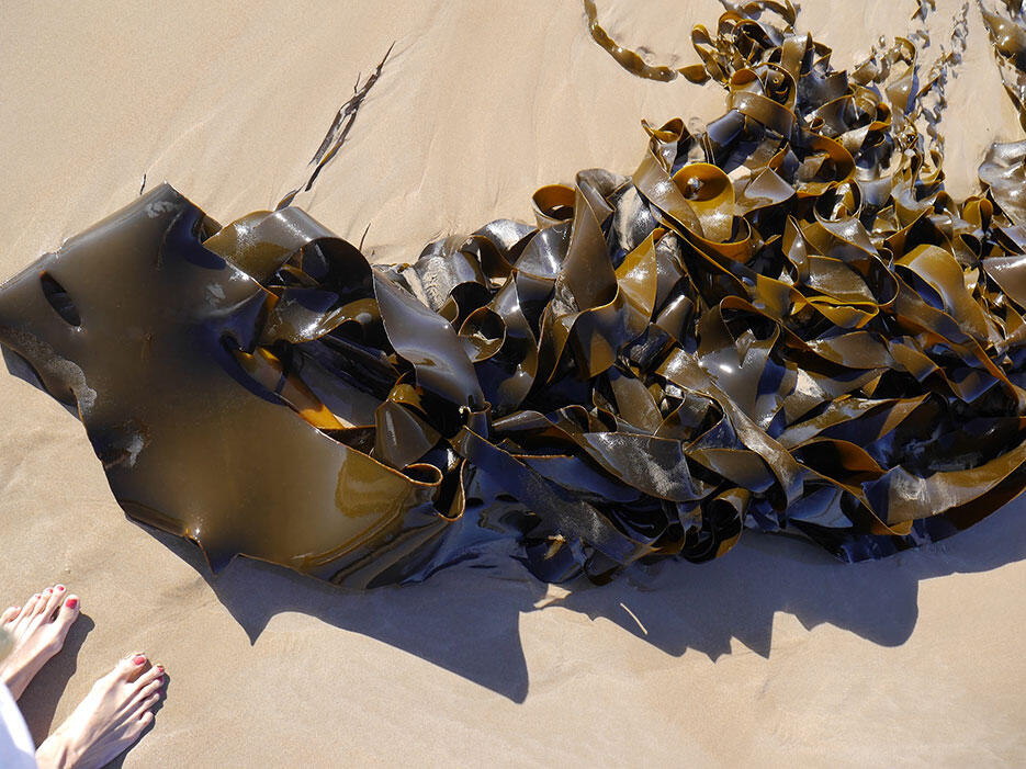 great-ocean-road-33-victoria-australia-giant-kelp-seaweed-beach