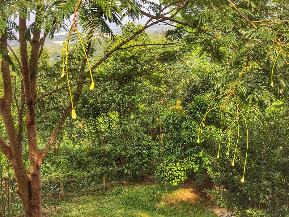 awanmulan-senja-seremban-15-nature-malaysia