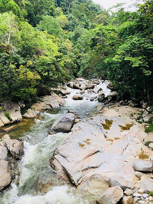 a-lentang-forest-bentong-pahang-2